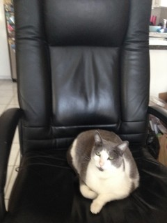 My cat on my desk chair